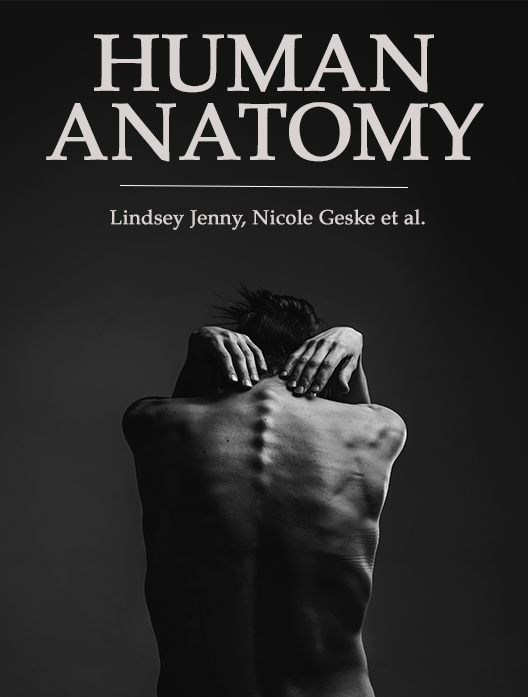 Human Anatomy Textbooks: Which Is The Best? | Top Hat