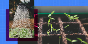 Seedling and water hose are shown side by side.